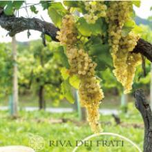 「カルティッツェ」の魅力と Riva dei Frati